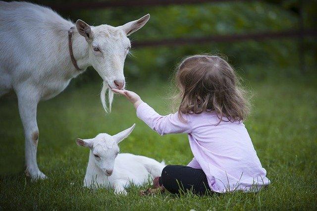 préparer la naissance pour les enfants et les animaux